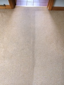 carpet cleaning melton