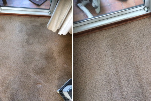 Dog Stain Before & After Cleaning