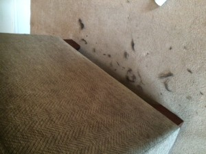 Stamford upholstery cleaning