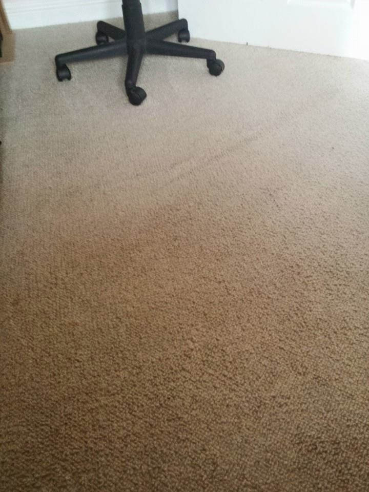 carpet cleaning of dog poo Melton