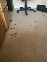 dog poo carpet cleaning Melton mowbray