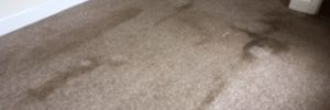 the best carpet cleaner oakham